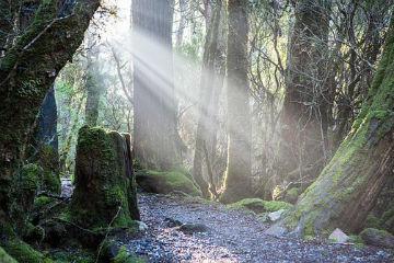 IMMAGINA DI VIAGGIARE CON LA MENTE… (2)… Oggi ti porto nel bosco